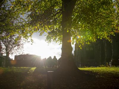 Have your say to improve tree and woodland plans in the city