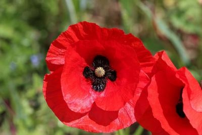 Remembrance Sunday plans announced for Wolverhampton